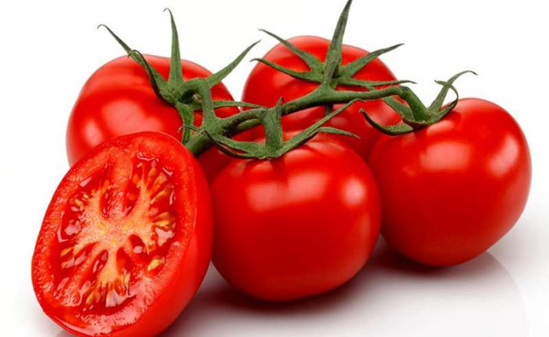 انواع روش های موثر دفع آفات گوجه فرنگی