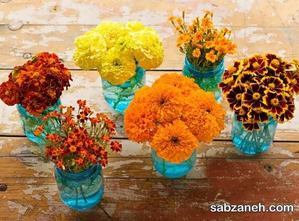 انواع گل جعفری