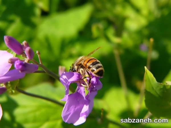 مهمترین انواع گل های پر شهد
