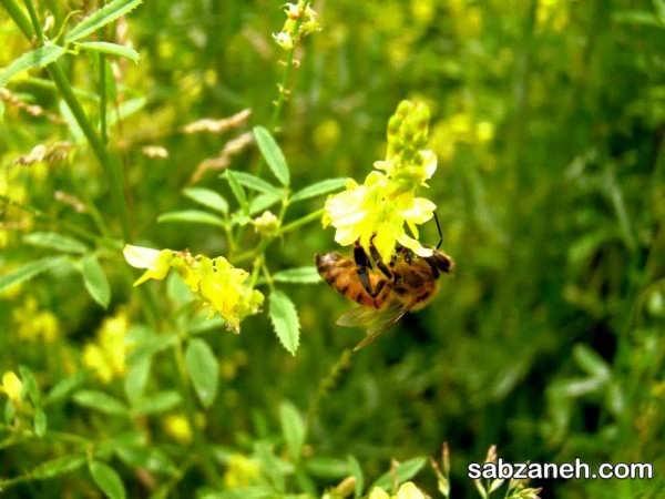 انواع گل های پر شهد و گرده زا
