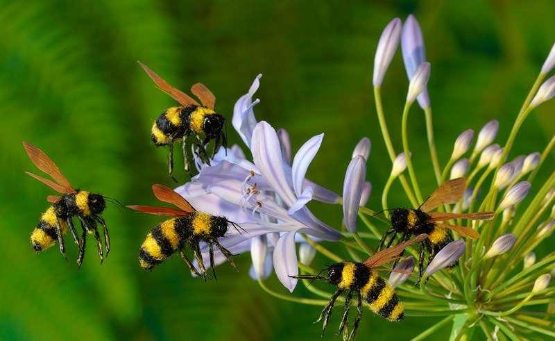 آشنایی با انواع گل های شهدزا