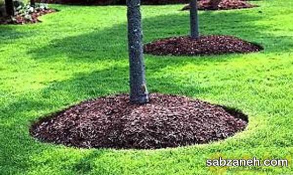 مزایای ساخت کود با خاک اره