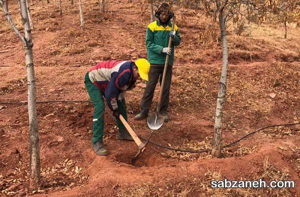 روش های آماده ساختن زمین برای زمستان