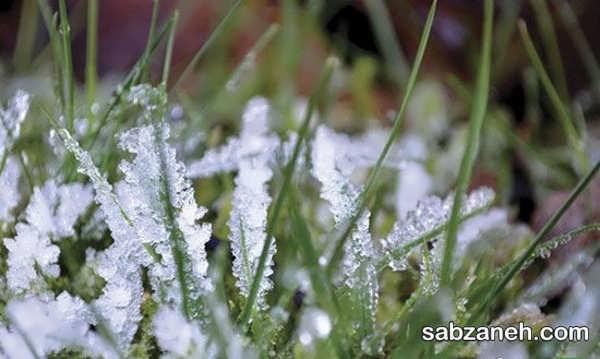 مراحل مهیا ساختن باغ برای زمستان