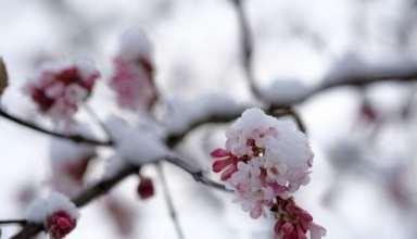 آشنایی با اقدامات لازم آماده سازی باغ برای زمستان