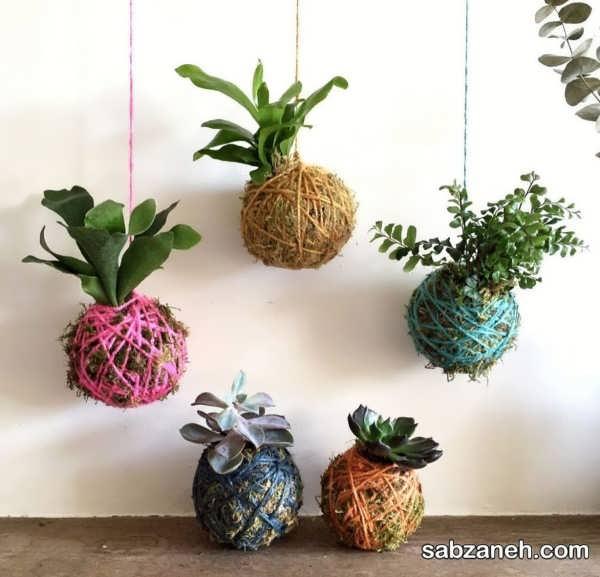 کوکداما با گیاهان مختلف