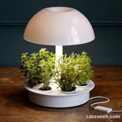 لامپ و رشد گیاهان