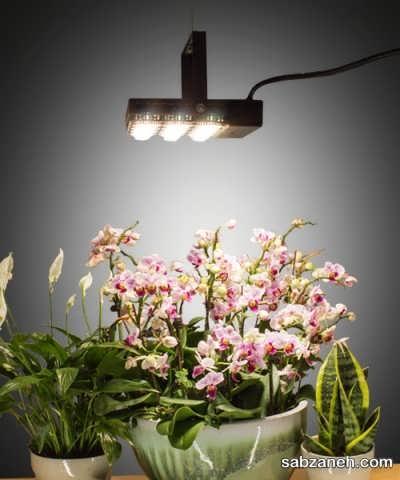 لامپ برای رشد گیاهان