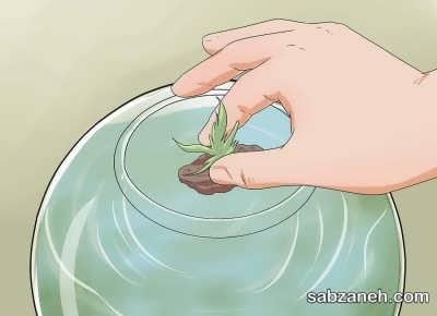 کاشت گیاه در تراریوم